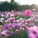 rosa silva polanco