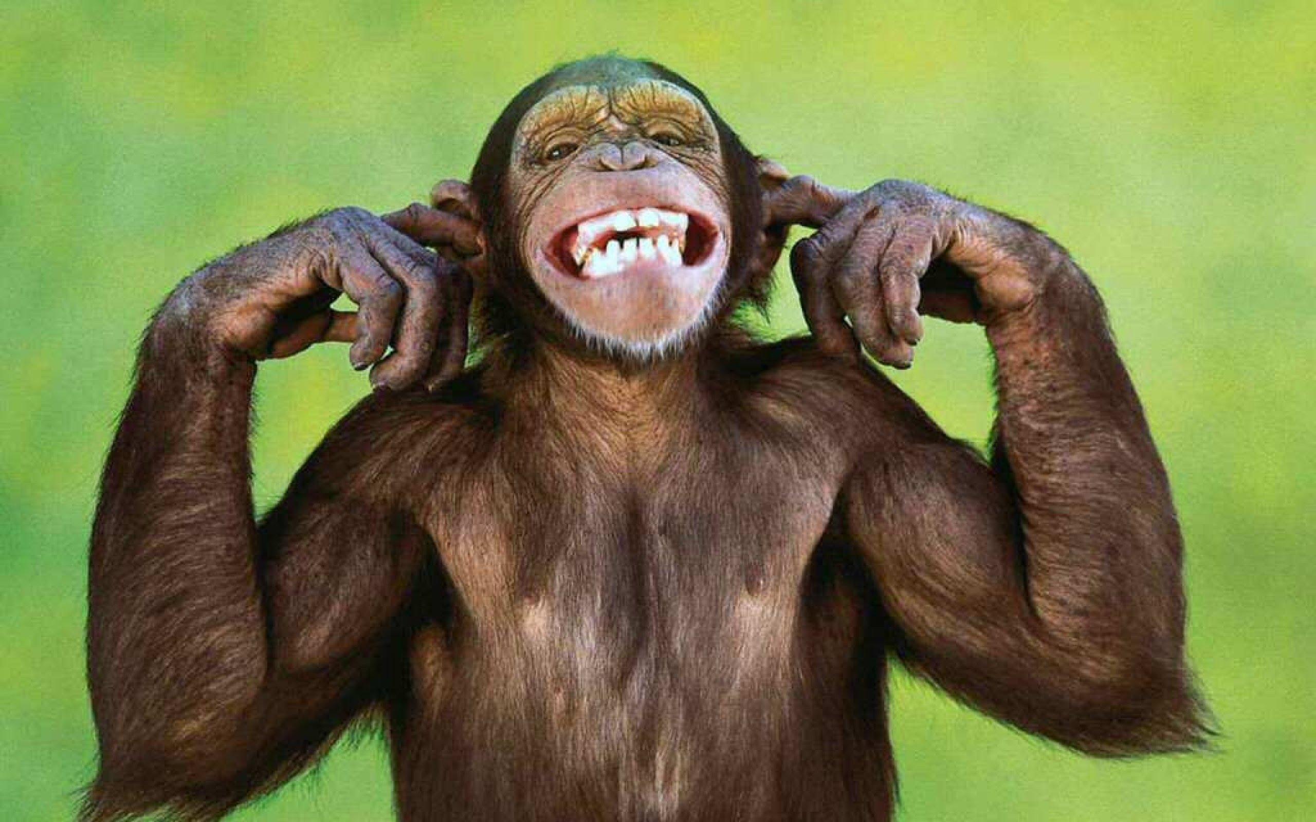 #Somos los gorilas hu hu hu