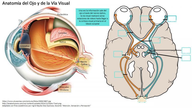 Mapa Interactivo Vía Visual. ojo humano. Ingrid Nayibe Díaz Es...
