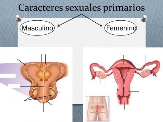 Mapa Interactivo Caracteres Sexuales Primarios C