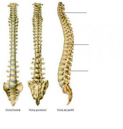 Mapa Interactivo Columna vertebral. anatomia humana. Fran Vill...
