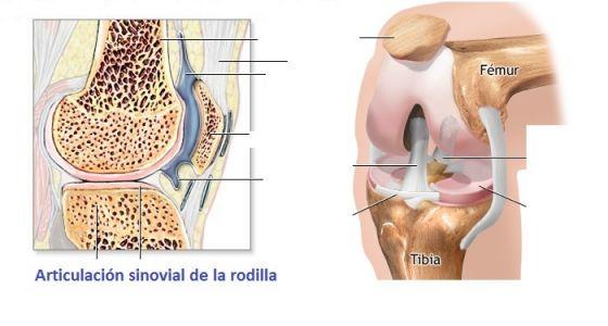 ATS UD 2 Articulación Sinovial. articulaciones. Natalia Mancil...