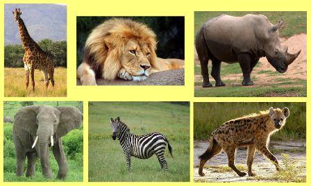 Map Quiz Nomes De Animais Selvagens Animais