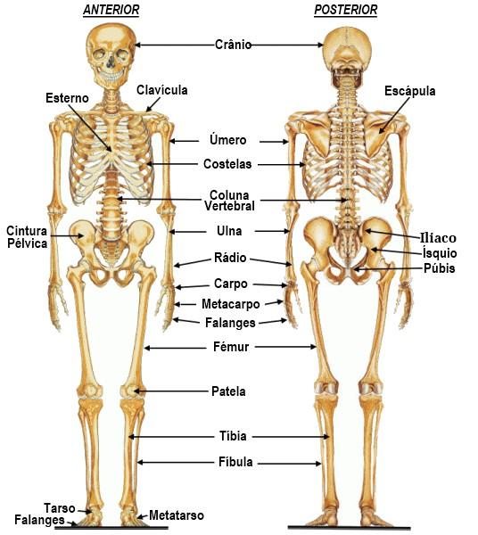 Presentación EL IMPONENTE SISTEMA OSEO!!!. huesos del cuerpo h...