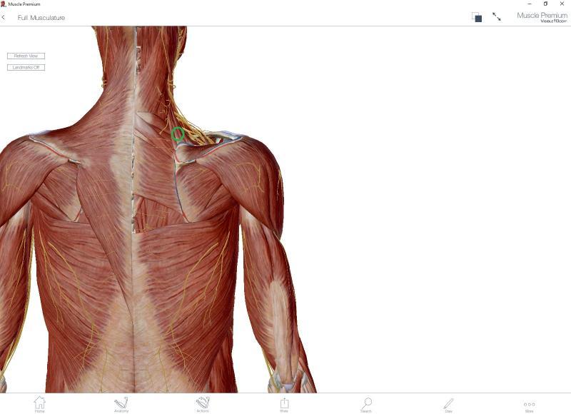 Print Músculos del hombro. Visión Posterior. test. Ruben Ruflex - Ed...