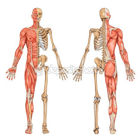 Mapa Interactivo anatomia . educacion fisica. sebastian viaux ...
