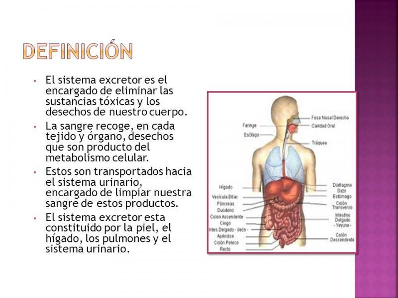 Slide show LOS SISTEMAS DEL CUERPO HUMANO. nutrición. Sheyris ...