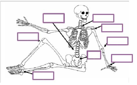 En articulacion humano cuerpo el una que es