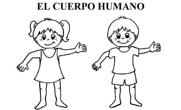 Test El Cuerpo Humano Biología 3º Primaria El Cuerpo