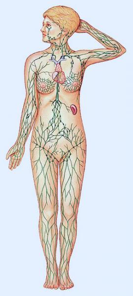 Print Punción venosa periférica.. anatomia humana. Victor Hugo Rosal...