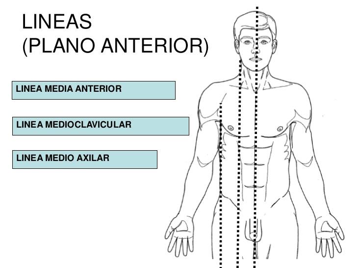 Dorable Tomar La Anatomía En Línea Embellecimiento - Anatomía de Las ...