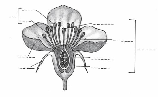 Map Quiz Partes De Una Flor Biología 1º Educación Secundaria Curso Educaplay Botánica Flor